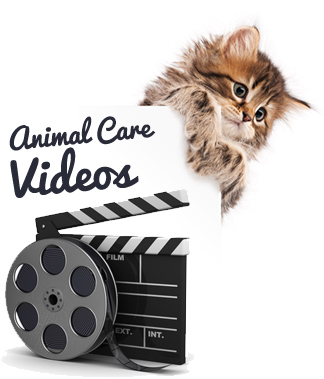 Videos - Community Veterinary Clinic - Turlock, CA