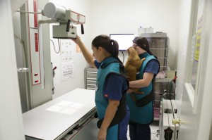 Community Veterinary Clinic CA-15