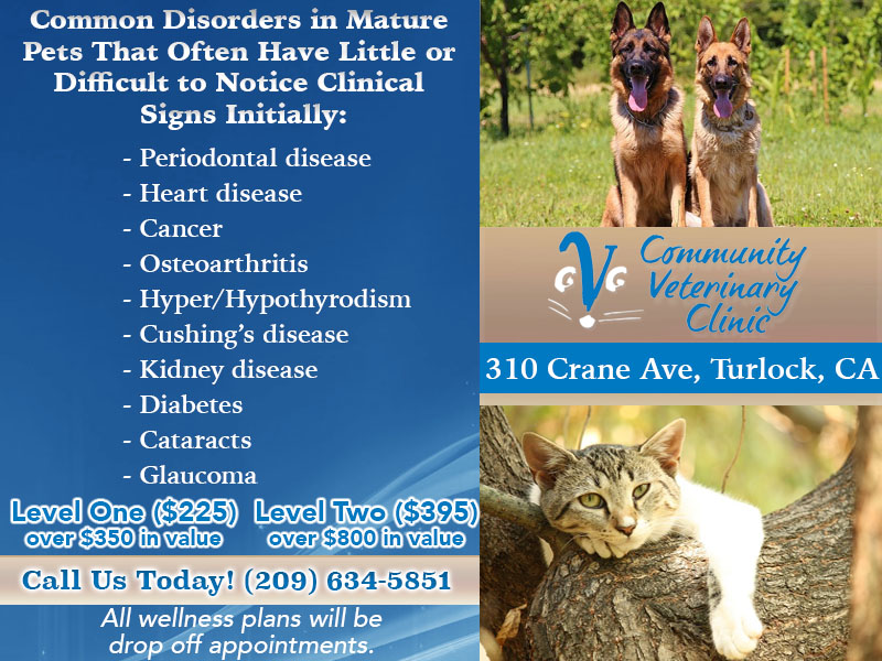 Senior and Mature Pet Care - Community Veterinary Clinic - Turlock,CA