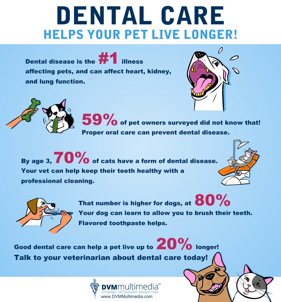 Pets Need Dental Care! - Community Veterinary Clinic - Turlock, CA