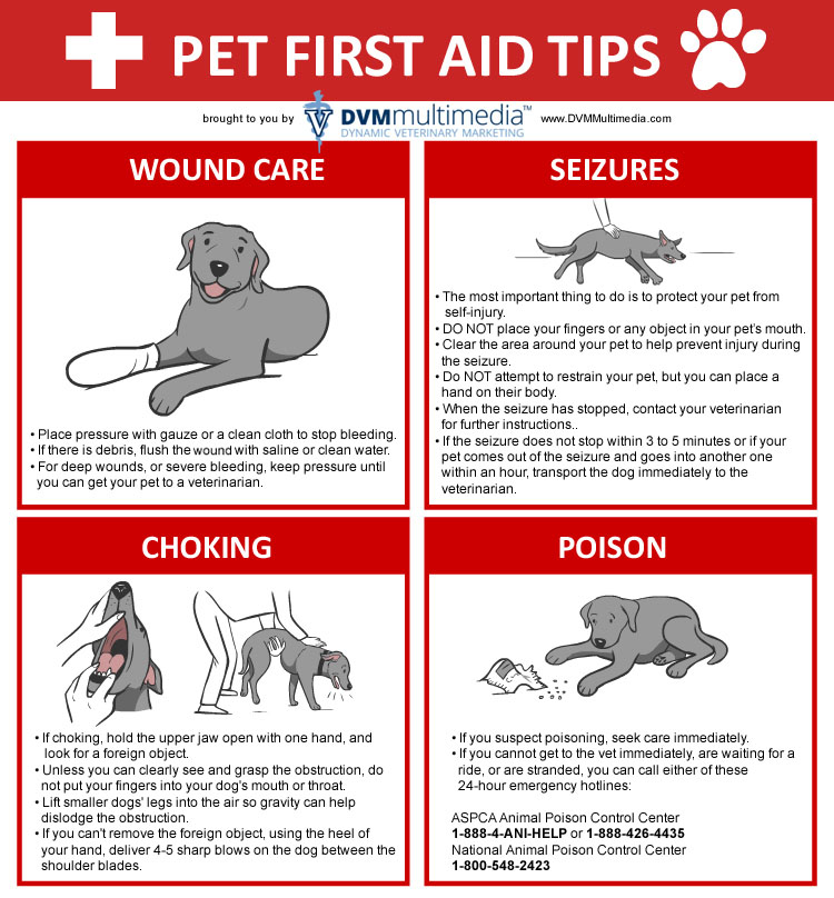 Pet First Aid - Community Veterinary Clinic - Turlock, CA