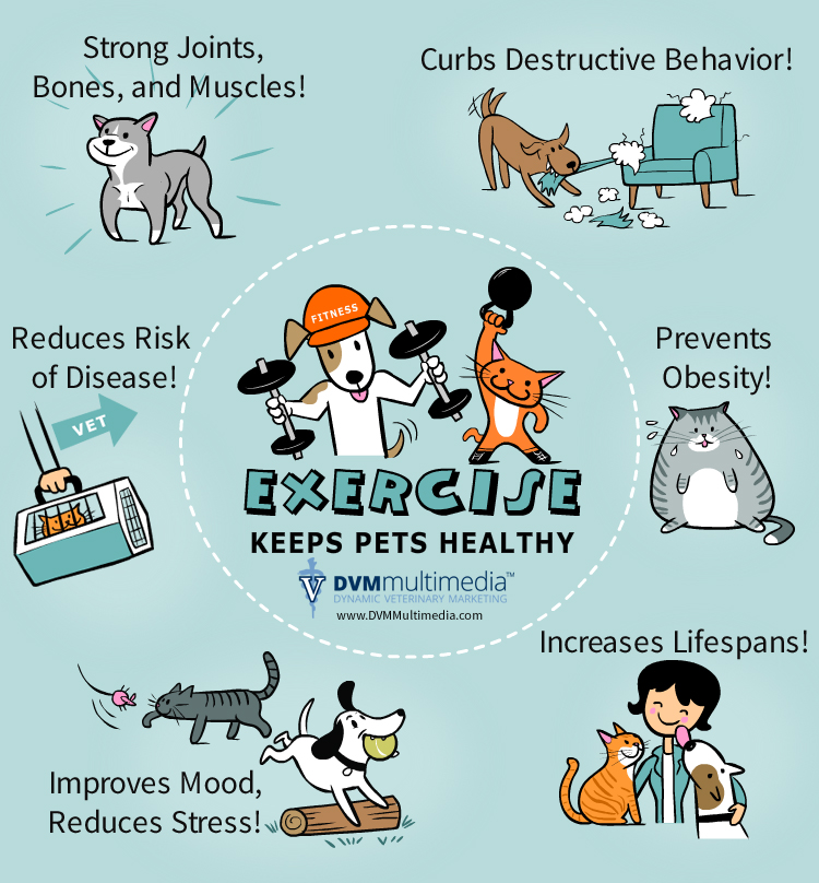 Exercise for Pets - Community Veterinary Clinic - Turlock, CA