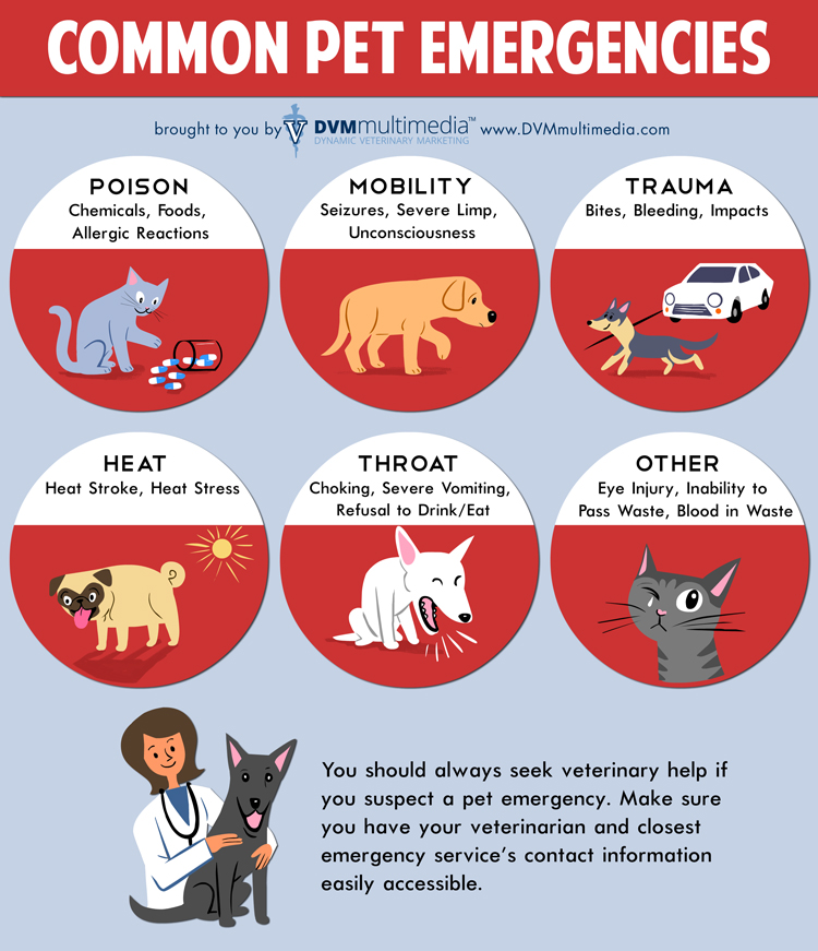 Common Pet Emergencies - Community Veterinary Clinic - Turlock, CA