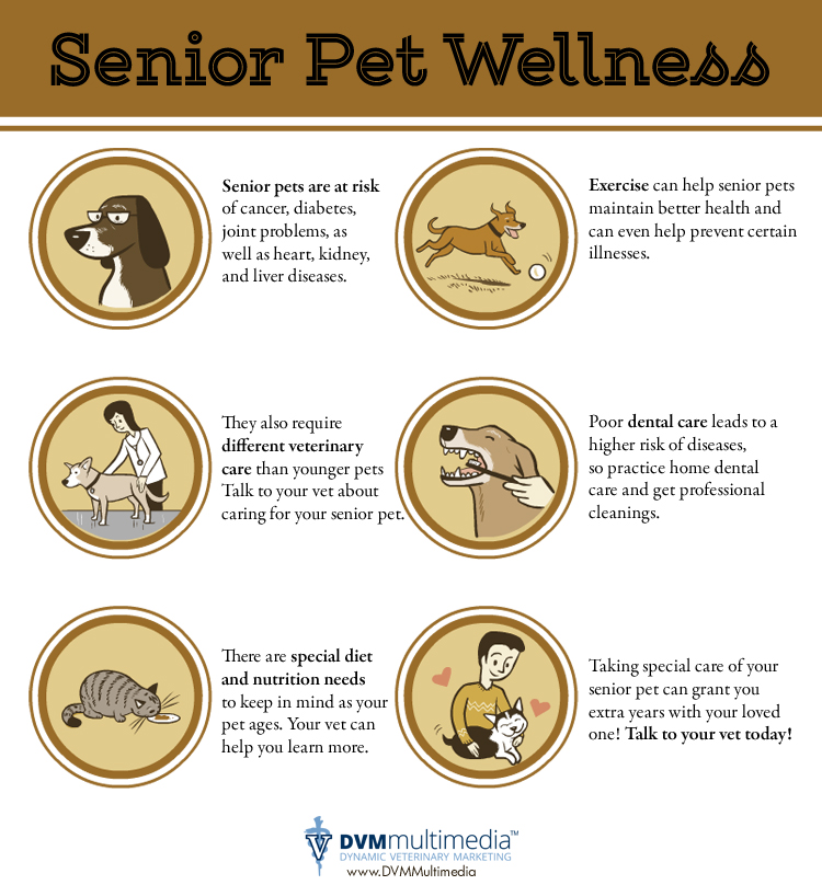 Senior Pet Wellness - Community Veterinary Clinic - Turlock, CA