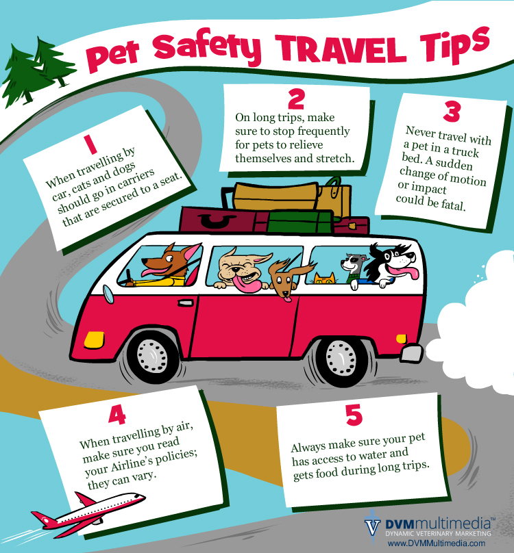 Pet Travel Safety Tips - Community Veterinary Clinic - Turlock, CA