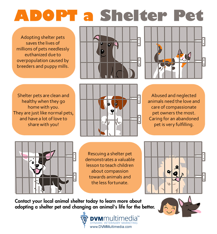 Adopt a pet in Modesto and Turlock, CA