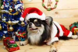 Protect Your Furry Friend with These Holiday Pet Safety Tips - Community Veterinary Clinic - Turlock, CA