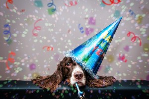 Tips For A Safe New Year's and Holiday For Your Pets​ - Community Veterinary Clinic - Turlock, CA