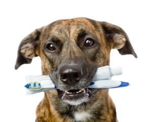 At Home Dental Care For Pet Dog and Cat Between Vet Visits - Community Veterinary Clinic - Turlock, CA