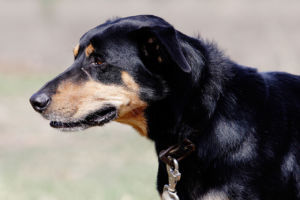 does your dog need to go grain-free