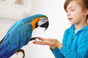 11 Ways To Protect Your Exotic Bird