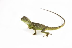 Protecting Your Pet Amphibians And Reptiles From The Heat