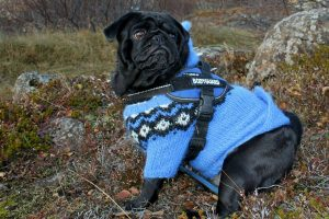Do Dogs Need Sweaters or Jackets?